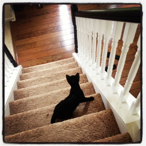 Hitch on the stairs